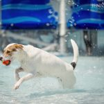 dog swimming in water fort worth dog event