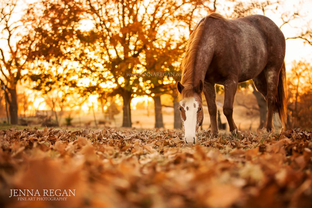 jenna regan awards winning photo dallas equine photography in the fall with paint horse