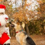 jenna-regan-pet-photography-with-santa
