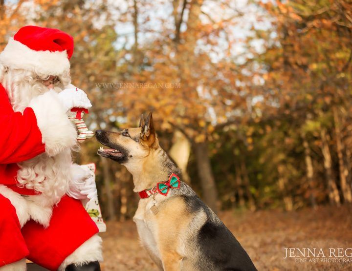 VIDEO: Paws and Claus Pet Portrait Experience | Holiday Pet Photos with Santa | 2018