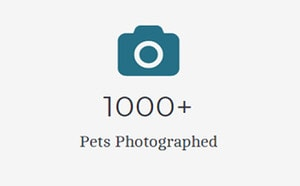 jenna regan pet photography professional thousands of pets