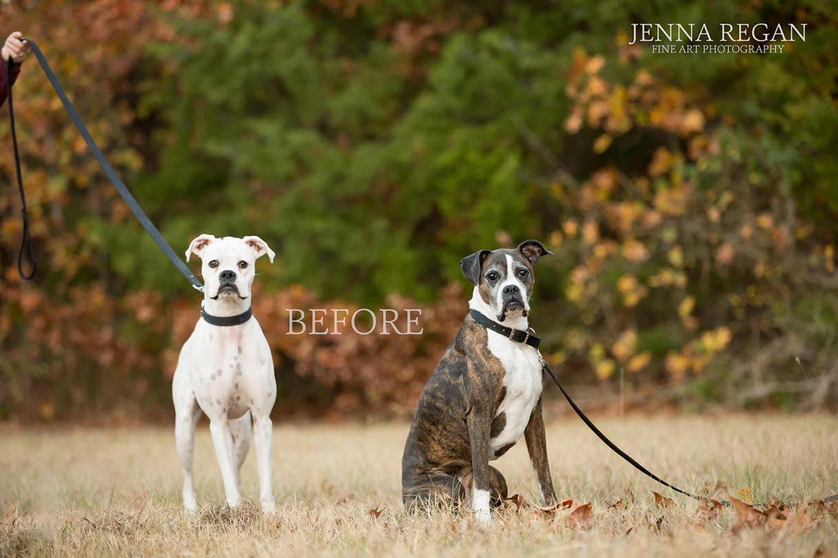 before editing jenna regan photography dog portraits
