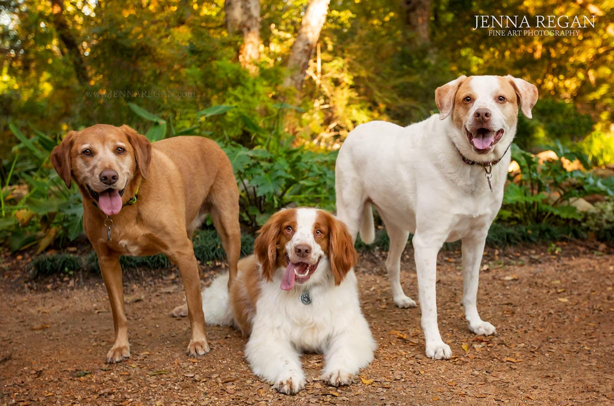 britany dog photo session- frisco pet photography- jenna regan dog photography