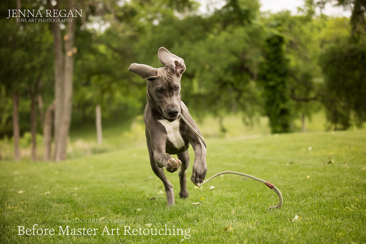 great dane puppy photo shoot prosper texas before editing