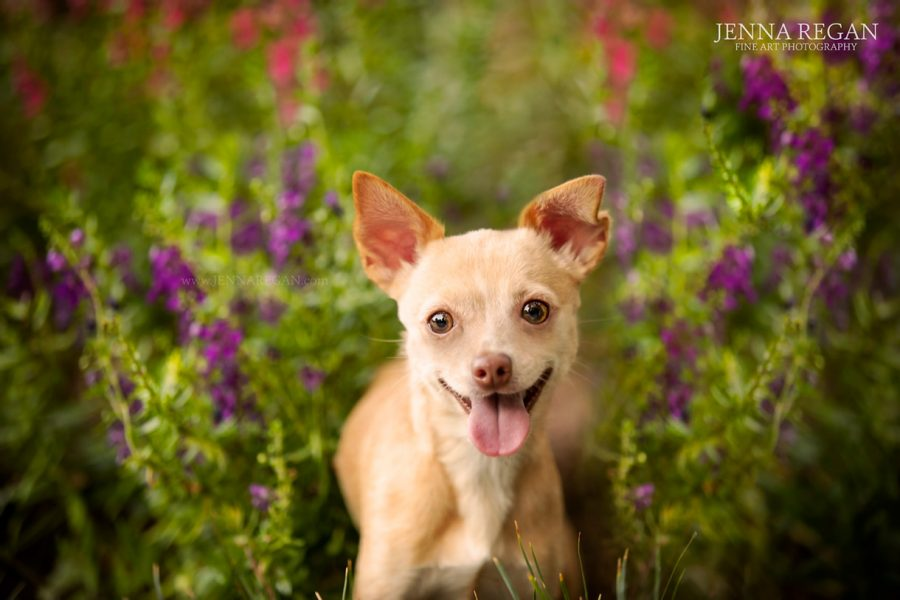 Our COVID- 19 Update | Policies for DFW Pet Photography