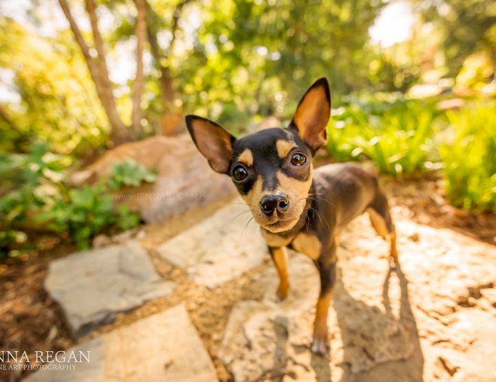 7 Tips to Planning the Ultimate Puppy Photo Session | Puppy Photography Dallas Fort Worth TX
