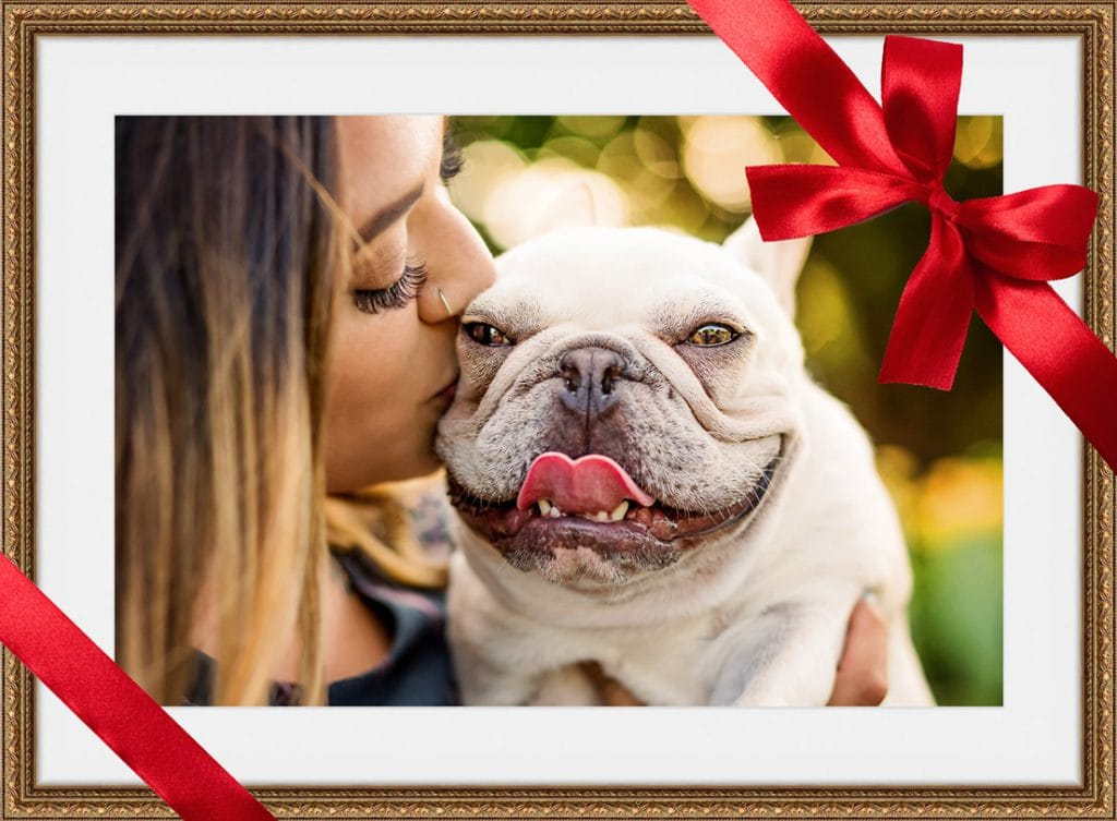 pet photography gift certificates